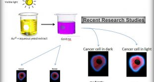 Yeast & Gold, Killed Cancerous Cells effectively
