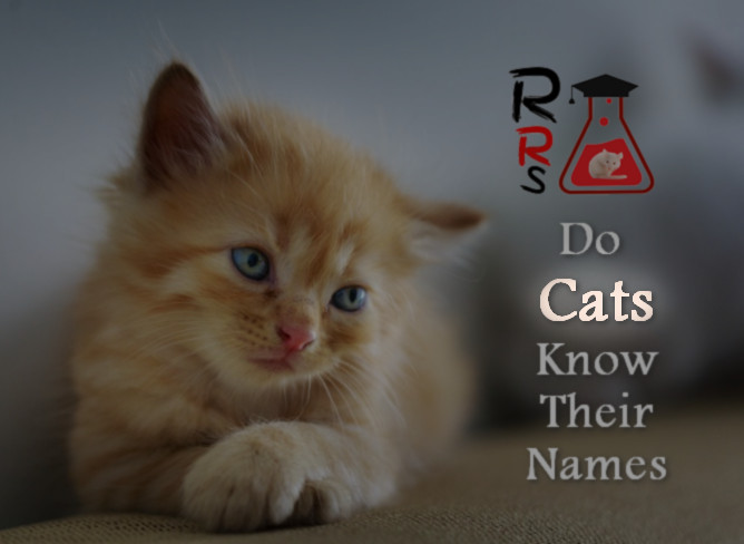 do cats know their names