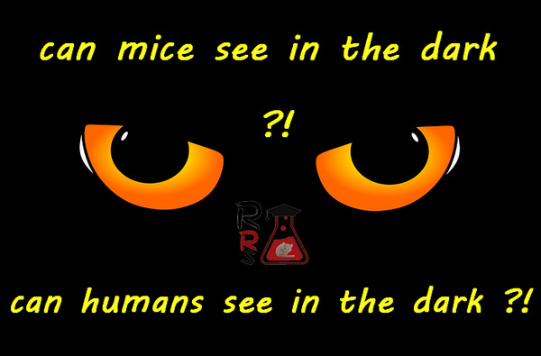 can mice see in the dark